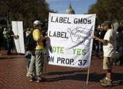 gmo-label-supporters-in-california