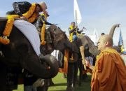 thai-buddhist-monk-blesses-elephants